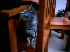 2004-07-11 - De Katten - 07 (TeamNagele) Tags: huisdieren kruimeltje