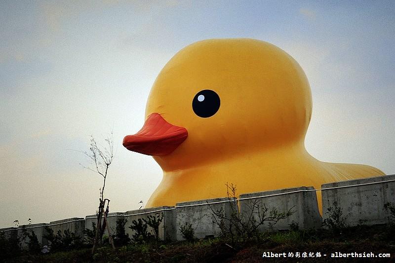 【黃色小鴨】桃園新屋.桃園地景藝術節