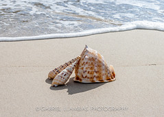 Shells on the beach (GLL Photography) Tags: ocean life travel blue sea summer vacation sky sunlight white holiday macro tourism beach nature water beautiful beauty sunshine season relax landscape island bay coast sand marine colorful paradise natural starfish outdoor background object space shell wave sunny resort shore tropical seashell leisure caribbean concept relaxation seashore copy idyllic menorca noviembre13