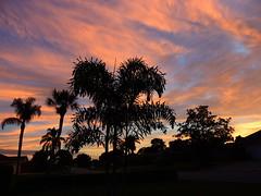 Florida Sunset (Jim Mullhaupt) Tags: pink trees sunset red wallpaper sun palms fire evening flickr florida dusk bradenton foxtail yelllow wodyetia mullhaupt jimmullhaupt