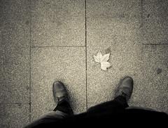 Autumn (Oscar.vng) Tags: barcelona street autumn bw man hoja blancoynegro blackwhite calle shoes fuji floor bcn streetphotography bn zapatos pies otoo fujifilm hombre x20 suelo passeigdegracia paseodegracia fotografiacallejera oscarvng osanchezphoto fujifilmx20