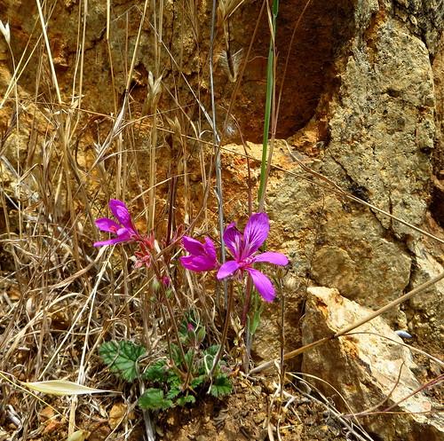 Native flora at Nigretta Falls  Dec.2013