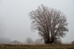 En un lugar solitario (fernando garca redondo) Tags: mist cold fro niebla castilla bruma elviajeaningunaparte enunlugarsolitario