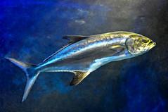 (the-father) Tags: fish aquarium blinkagain bestofblinkwinners blinksuperstars