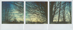 trees are sanctuaries (iam.ina) Tags: wood blue trees winter sunset sky color tree art nature silhouette analog forest germany polaroid sx70 photography woods triptych skies natur siluet forests pola emptiness impossible polaroidsx70 treeporn impossibleproject theimpossibleproject sofortbildfilm inaechternach px70colorshade vision:text=0709 vision:outdoor=0881