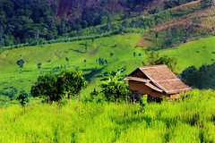 cottage in field (Khun THUM.SI) Tags: green nature field cottage