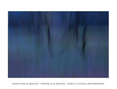 LANDSCAPEINMOTION2015-006 (Edwin Loyola) Tags: winter abstract nature landscape seasons icm intentionalcameramovement landscapeinmotion edwinsloyola edwinloyola edwinsloyolaphotography