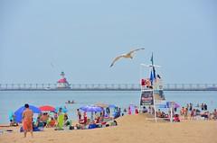 Beach and lighthouse (St.Joseph, Michigan) (stevelamb007) Tags: people usa lighthouse bird beach nikon michigan seagull gull stjoseph lakemichigan 18200mm stevelamb d7200