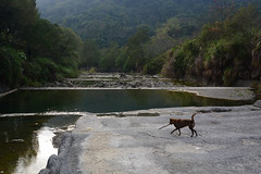 Sticks Are Great! (Bob Hawley) Tags: nikond7100 nikon2870mmf3545afd asia taiwan zhongliaotownship taiwantugou pets dogs swimming rivers playing sticks trees forest water