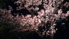 IMAG1635 (mikaos/米高) Tags: 日本東京 htconex