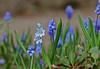 spring (dr.larsbergmann) Tags: flickr nature macro flowers flowerscolors languageofflowers