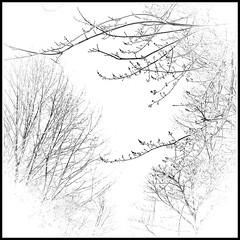 Branch Office (di_the_huntress) Tags: picmonkey sliderssunday blackandwhite winter branches minimalist cold frosty pennsylvania