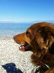 Victor #dog #mydog #beach #greece #dogsatthebeach #spring (chrispantazakou) Tags: greece dogsatthebeach mydog spring beach dog