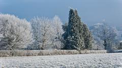 Trees (IanbPhoto) Tags: brockhampton wye valley walk idyllic beautiful wintery