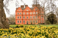 Kew Palace (Julian Cook Photography) Tags: daffodils england flowers focusstack kew kewgardens kewpalace londonboroughofrichmond outdoor royalbotanicgardens spring uk unitedkingdom