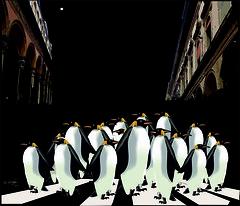 Lost (Amparo Higón) Tags: lost perdidos pingüinos penguin