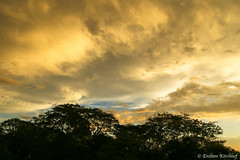 Clouds at sunset (Enilton Kirchhof) Tags: canoneos6d ferias201617 fotoeniltonkirchhof clouds céu goldensky nuvens pordosol silueta sky sunset viradadoano santamaria riograndedosul brazil br sonnenuntergang crepúsculo