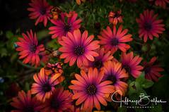 Flowers-6379