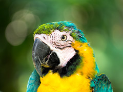 Macaw (Ed Rosack) Tags: usa bird animal florida captive macaw sanford centralflorida centralfloridazoo