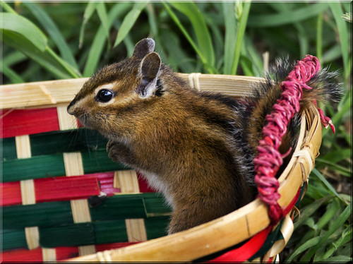 Chippy in a Basket