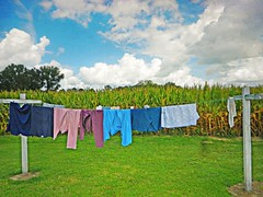 Clothes Lines and Corn Fields:  Edgecombe County, North Carolina (EdgecombePlanter) Tags: texture colors clouds nc corn cornfield northcarolina wash clothesline washing textured washday edgecombe