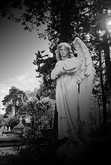 (walterioju) Tags: film argentina nikon angeles cementerio rosario n65 anlogo gimp28