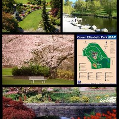 | no.68 | | Queen Elizabeth Park | (onemillionreasonstolovevancouver) Tags: world park city people tourism home promotion vancouver cool realestate profile today queenelizabethpark l4l vancity downtownvancouver metrovancouver onemillion cityofvancouver vancouverite vancouvercity vancouvertourism vancouverrealestate vanone awesomevancouver instaphoto instagood instafollow uploaded:by=flickrmobile flickriosapp:filter=nofilter miguelboccanegra thegreatervancouverarea
