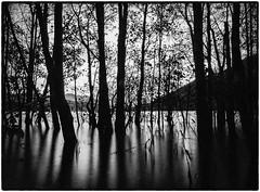Firkin Point (Caledonia84) Tags: tree landscape bay scotland nd 1855mm trossachs lochlomond cliche lonetree millarochy firkinpoint mirrorless sonynex5r
