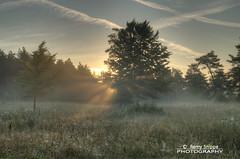 Morning Glory (Remy Snippe) Tags: sun mist tree nature sunrise germany landscape bomen nikon eifel beam sunburst morningglory geel zon spiderwebs duitsland spinnenweb d90 zonnestralen zonsopkomst gerolstein tamron1750mm remysnippe wwwremysnippenl