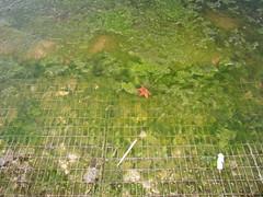 (William Keckler) Tags: winter mind algae