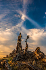 (Marc Crumpler (Ilikethenight)) Tags: california trees sunset usa grass clouds canon landscape hiking trails hills eastbay ebrpd roundvalley contracostacounty eastbayregionalparkdistrict tamron1750 40d ebparks canon40d ilikethenight marccrumpler ebparksok