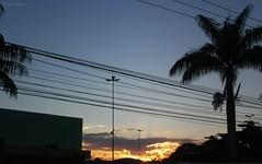 entardecer dourado (Carla Cordeiro) Tags: dourado prdosol rvore palmeira cuazul