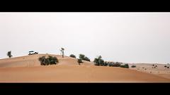 Dune Bashing in Dubai (elkarrde) Tags: macro dubai desert pentax 100mm adventure cinematic unitedarabemirates ae dfa dunebashing 2391 2013 k20d dfa10028macro pentaxk20d dubai2013 autumn2013 smcpentaxdfa100mm128macro
