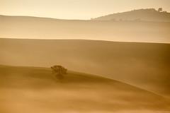 Il mio albero preferito/My favourite tree (Corsaro078) Tags: mist tree fog sunrise landscape alba hills tuscany toscana valdorcia nebbia albero paesaggio colline