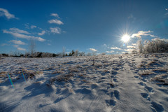 Icy Field (jasontfowler) Tags: winter guelph arboretum icestorm hdr sunstar 3xp