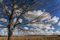 Crabtree Nature Preserve�Sony RX1