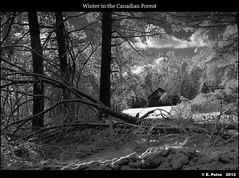 Winter in the Canadian Forest - InfraRed (episa) Tags: bw snow ontario canada cold forest infrared remote milton winter2013 sonynex5n sonynex50mmf18oss