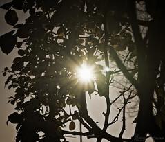 The sound of sunshine!