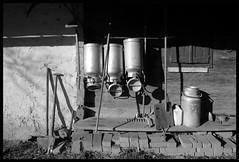 STYRIAN FARM (LitterART) Tags: austria cow milk sterreich mood cows farm farming bio calf bauernhof steiermark khe vache styria milch kalb milkcans farmstead milchkannen litterart gehft sterreichischemilch steirischemilch