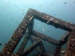 IMG_9142 (milewski) Tags: ocean water underwater salt scuba diving scubadiving saltwater underwaterphotography oceanphotography