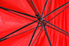 drop(ped) model (Scilla sinensis) Tags: red storm rain umbrella structure damage modell fotosondag fs140316