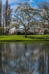 20140321-DSC03477-Edit.jpg (Komnas K.) Tags: reflection landscape photography rotterdam cityscape photoshoot erasmusbridge threetowers springintown cityphotoshoot