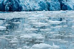 _MG_5029a (markbyzewski) Tags: alaska ugly iceberg tracyarm southsawyerglacier