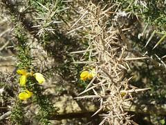 Unfriendly (petrOlly) Tags: flowers sea plants plant flower nature germany deutschland europa europe natura northsea nordsee borkum przyroda beautifulearth
