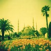 Blue Mosque and tulips (sonofwalrus) Tags: flowers trees film turkey garden holga lomo xpro lomography tulips middleeast istanbul mosque scan palmtrees crossprocessing bluemosque masjid minarets xprocessing hpc5380