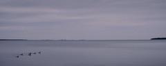 Grepen' (Mattias Lindgren) Tags: summer project sweden swedish 365 archipelago 50mmf14 2015 roslagen öregrund swedishsummer nikond600 project2015