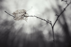 Leaf 2.0 (patrickmai875) Tags: leaf blatt sunny day sonnig tag wald forest nature bw monochrome sw natur sadness traurigkeit einsamkeit lonelyness canon 5d mark iv sigma art kunst 24mm f14 wow