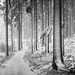 Preserve silence (desomnis) Tags: winter woods forest wood woodland nature trees snow cold monochrome landscape bw bokeh dof desomnis path blackandwhite blackwhite monochrom naturephotography 50mm canon50mmf14 forestpath snowy winterscape winterwonderland winterforest canon6d