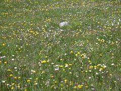 IMGP0544 (Alvier) Tags: schweiz graubünden albula albulapass engadin albulatal fahrrad velo