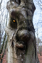 Geisterwald   Ghost wood (Burminordlicht) Tags: waldgeist geist geister ghost ghosts geisterwald unheimlich wald darsswald apparition wood ghostly witching hour geisterstunde gespenst troll trolle trollwald weird spooky spuk mystery misteriös misterious fake fakes böse fear angst horror